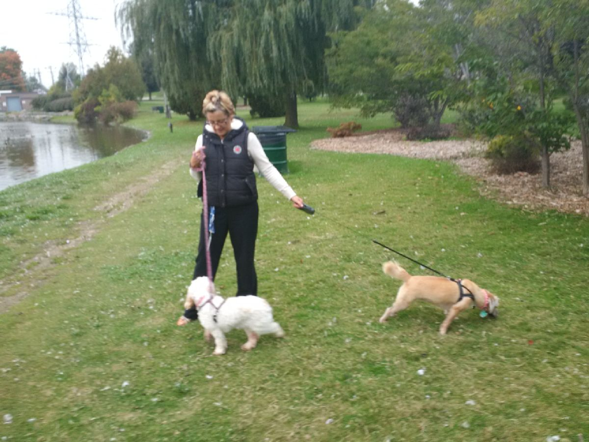 Dog Walking & Pet/House Sitting Services