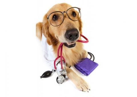Waggin' Wheelz Veterinary Services